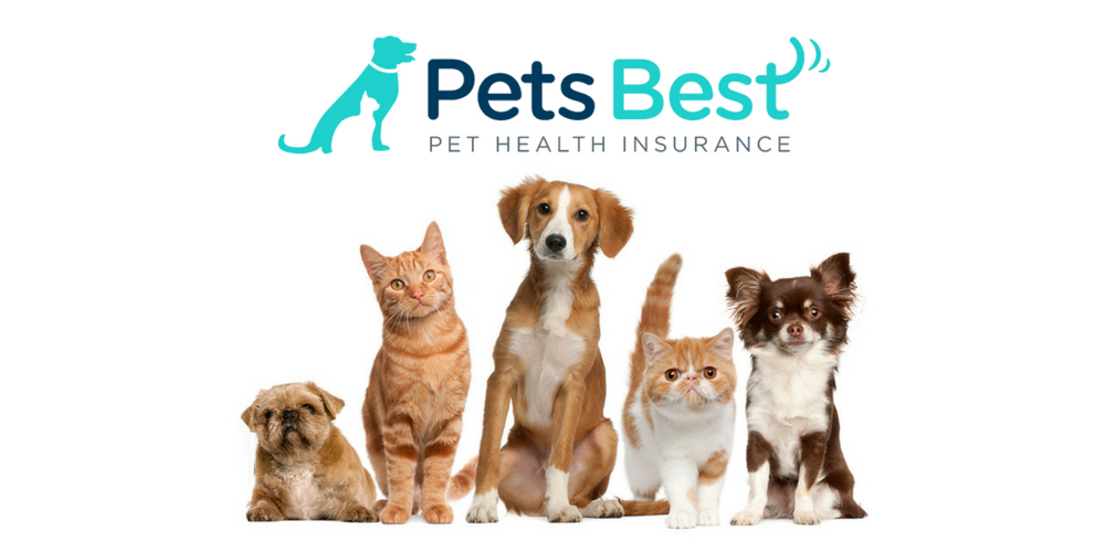 pets_best_insurance_reviews
