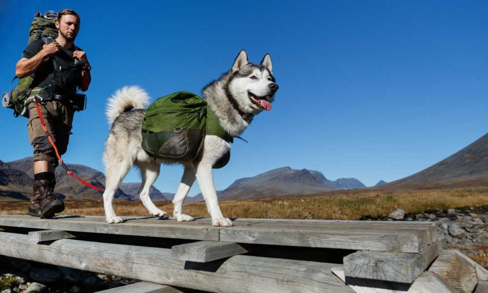 Best Dog Backpack in 2018 - Complete Reviews with Comparison