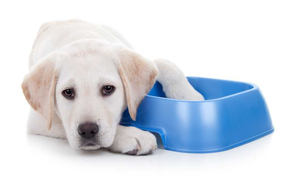 Best Dog Food for Sensitive Stomachs in 2018 - Complete Reviews with Comparison