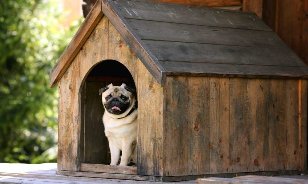 Best Dog House of 2018 Complete Reviews With Comparison