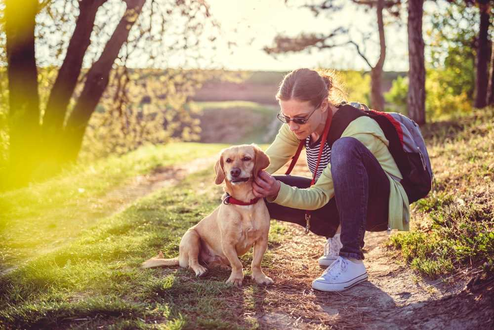 Best Flea and Tick Prevention for Dogs of 2018 Complete Reviews with Comparison