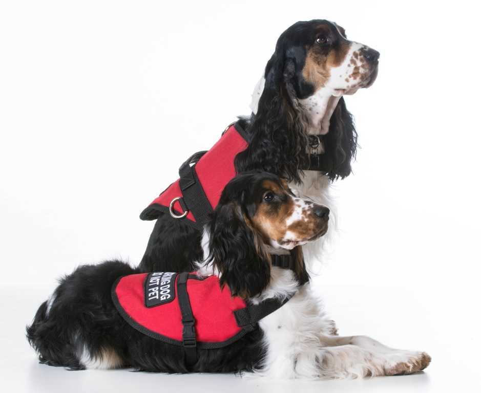 Best Service Dog Vests Of 2018 Reviews with Comparison