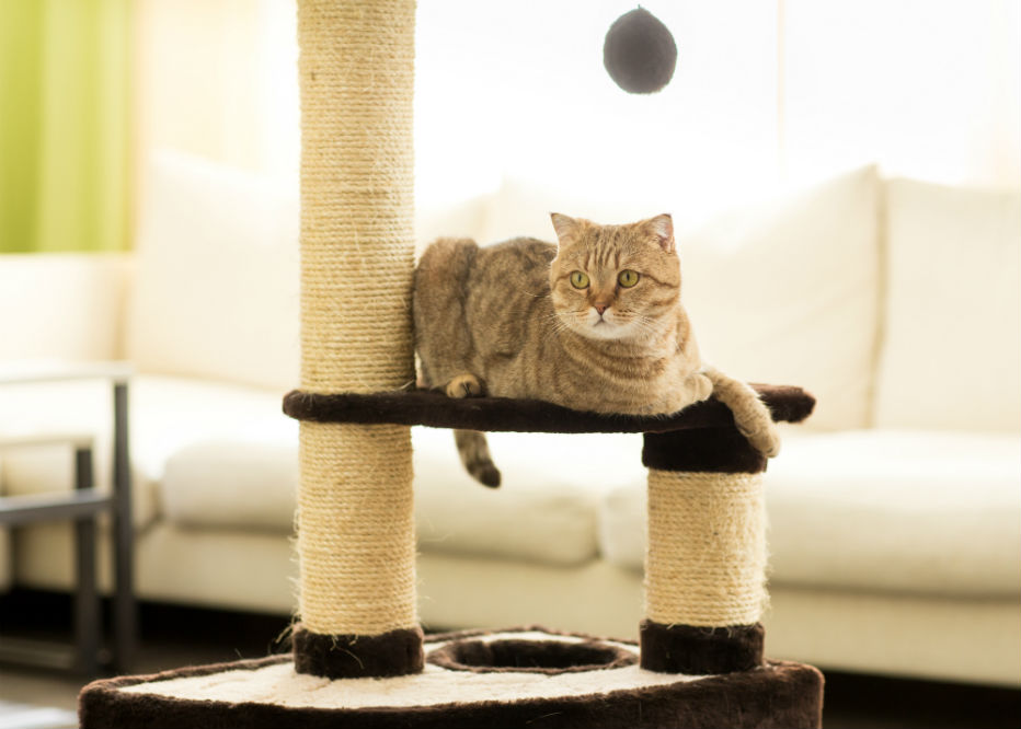Best Cat Scratching Post of 2018