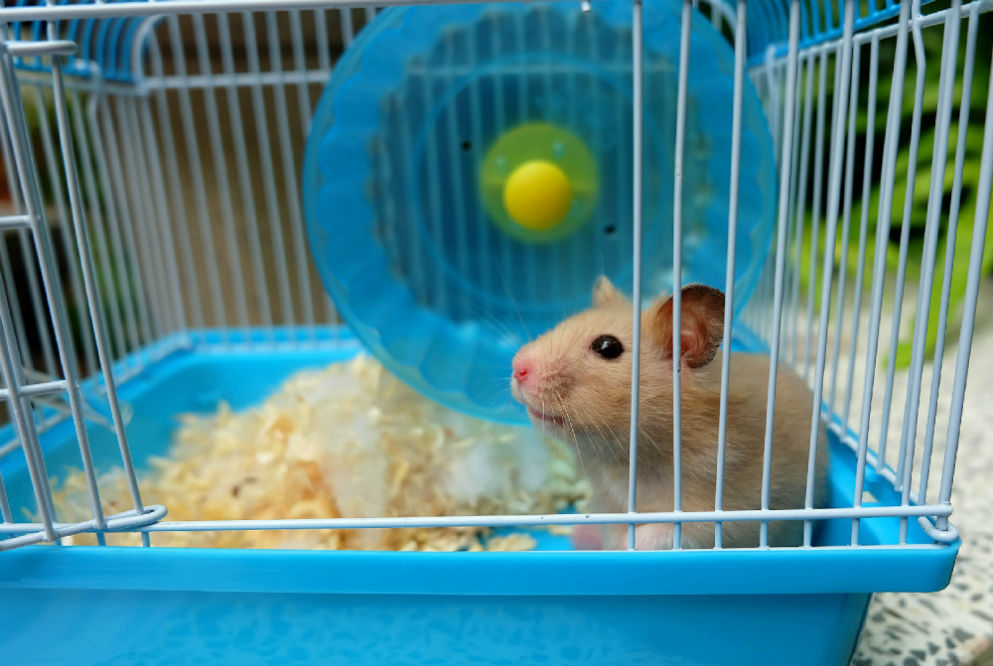 Best Hamster Cage of 2018
