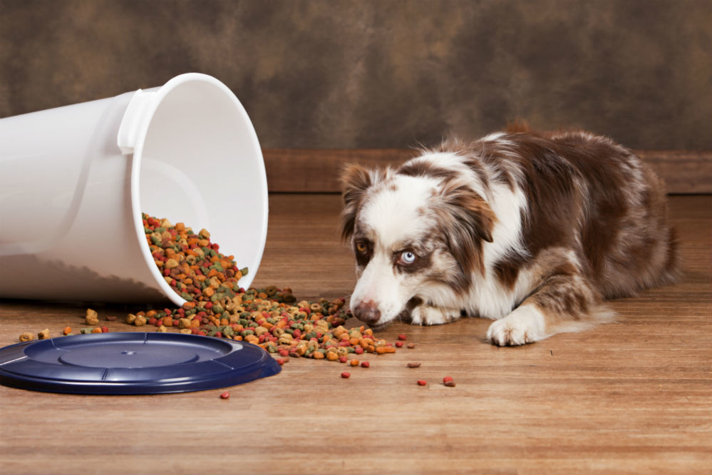 Best Beneful Dog Food Of 2018
