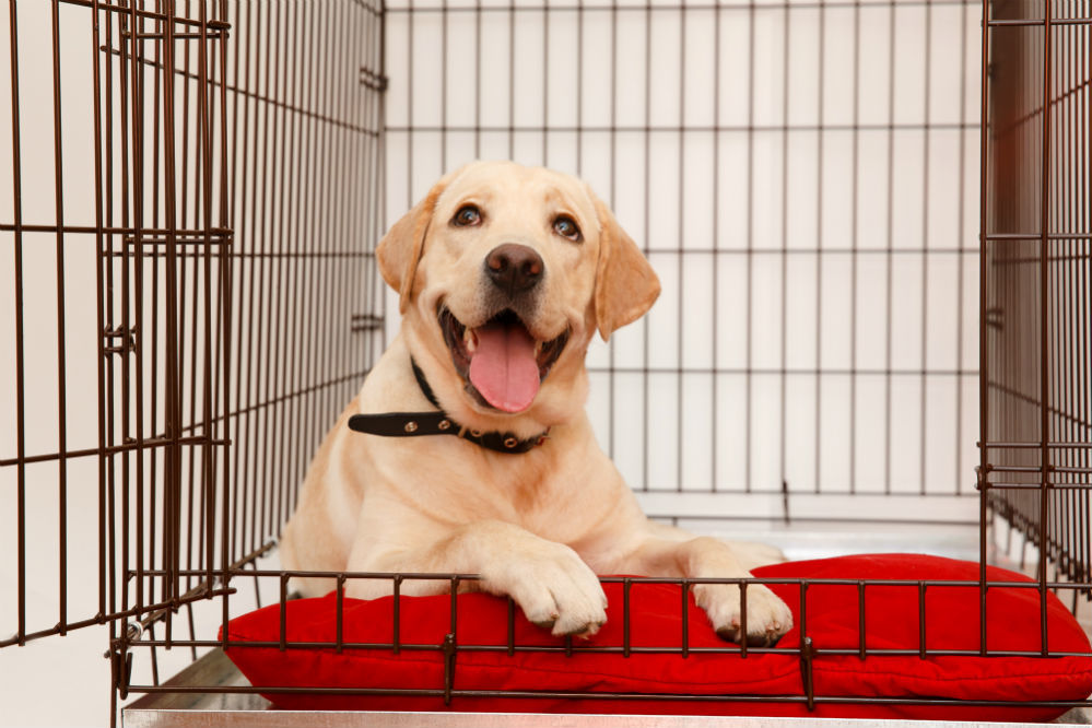 Best Heavy Duty Dog Crate of 2018