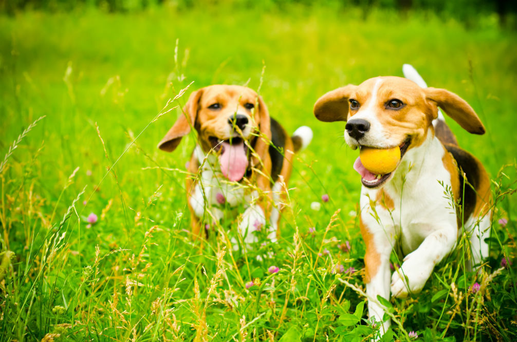 Funny Dog Names That'll Have You Laughing Out Loud!