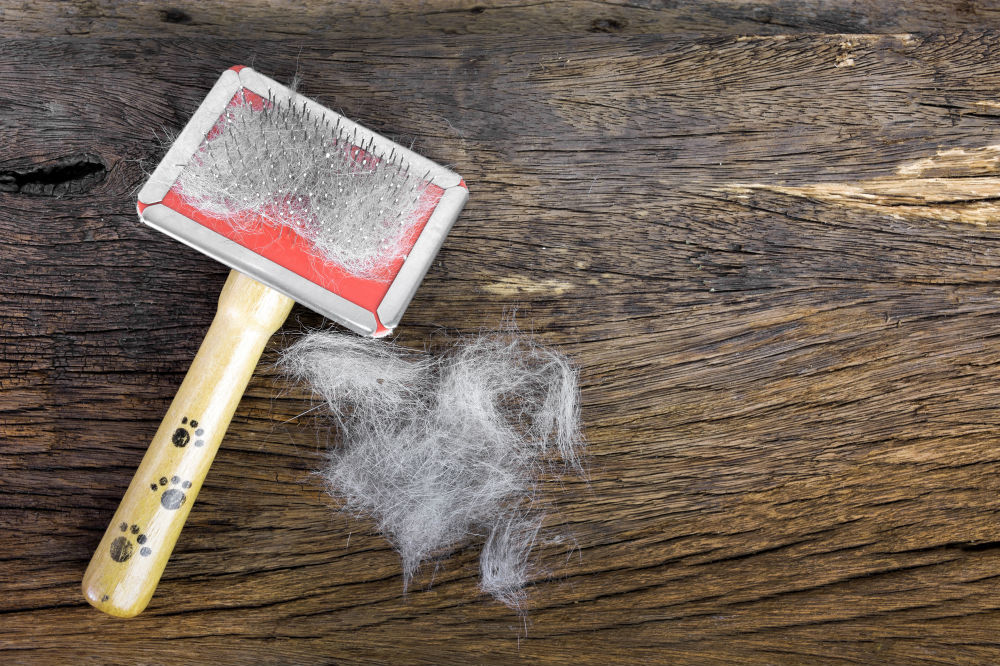 Best Dog Brushes for Your Furry Friends